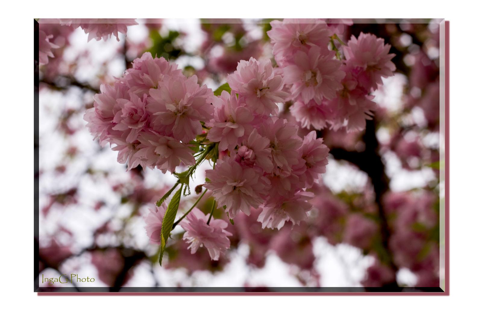 Frühling in Geisenheim 2