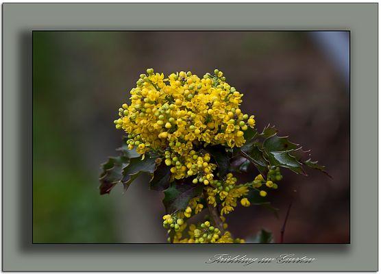Frühling in Gelb