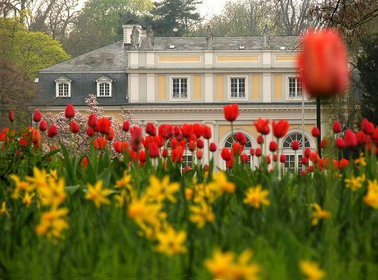 Frühling in Godesberg