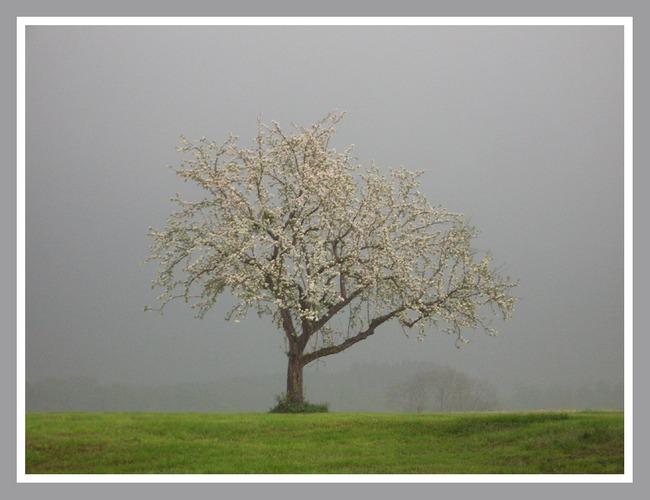 Frühling in Grau II