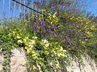 Frühling in Jerusalem