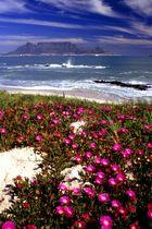 Frühling in Kapstadt