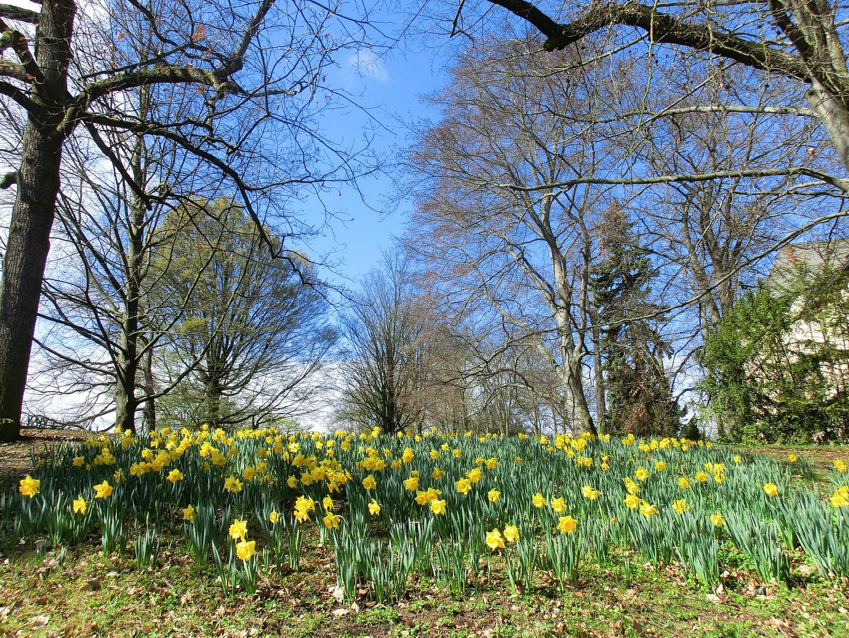 Frühling in Kassel 2