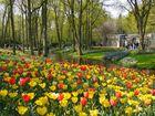 Frühling in Lisse