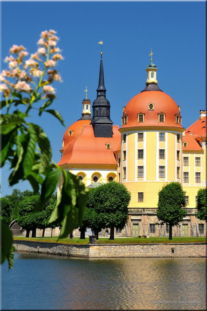 Frühling in Moritzburg