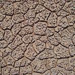 Frühling in Namibia - Natürliche Strukturen (10)