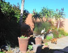 Fruehling in Namibia2
