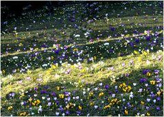 Frühling in Neugablonz