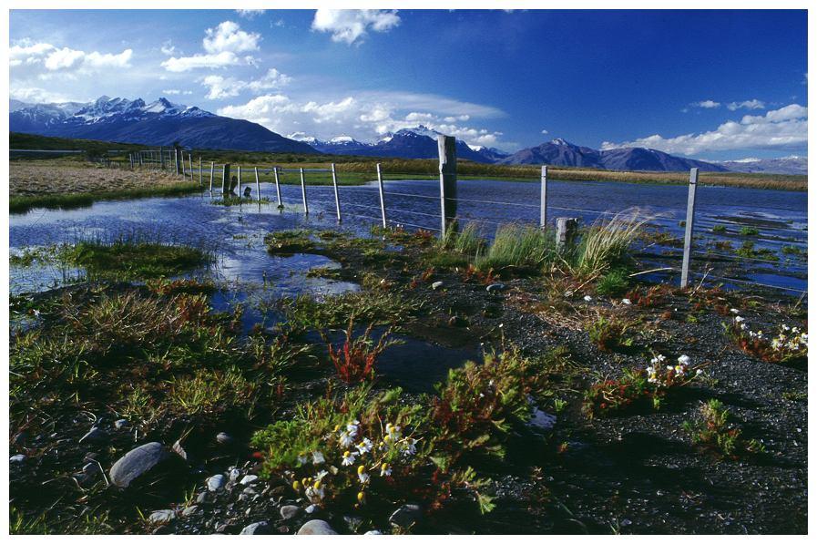 Frühling in Patagonien