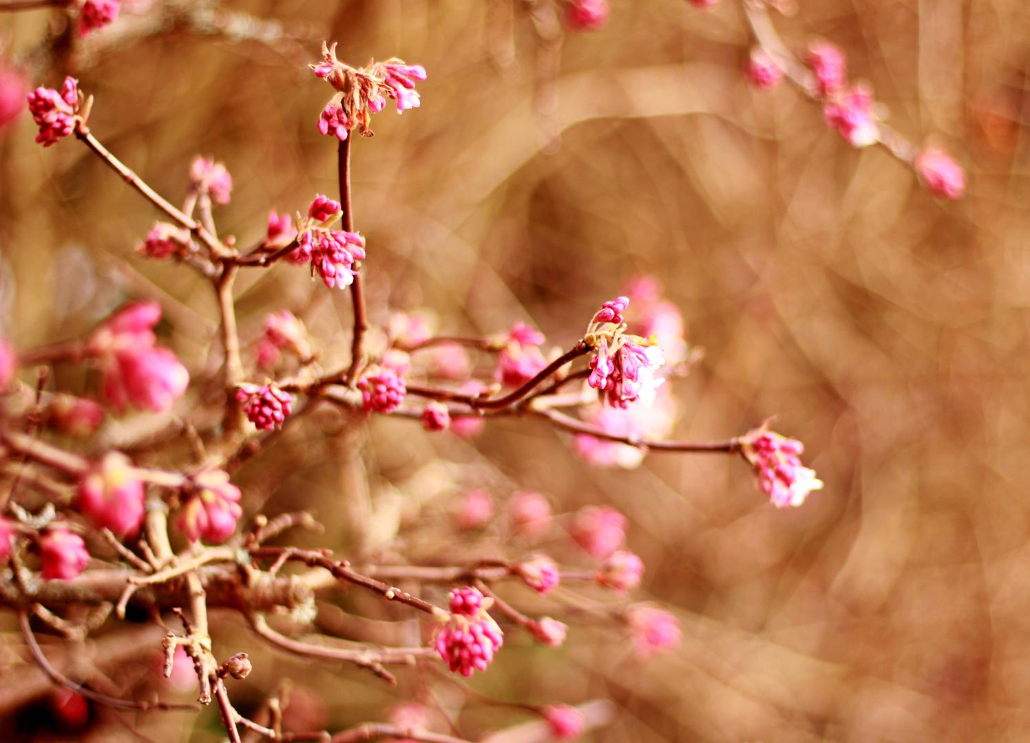 Frühling in Pink
