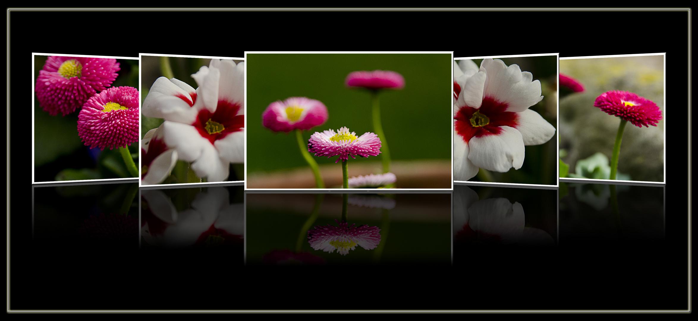 Frühling in pink und weiß