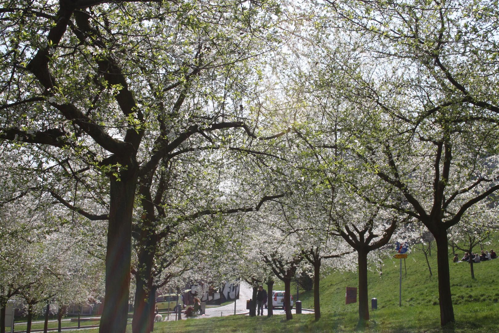 Frühling in Prag