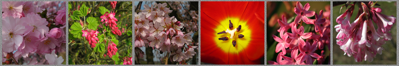 Frühling in rosa-rot