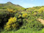 Frühling in Sardinien / Primavera in Sardegna (1)