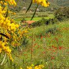 Frühling in Sardinien / Primavera in Sardegna (2)
