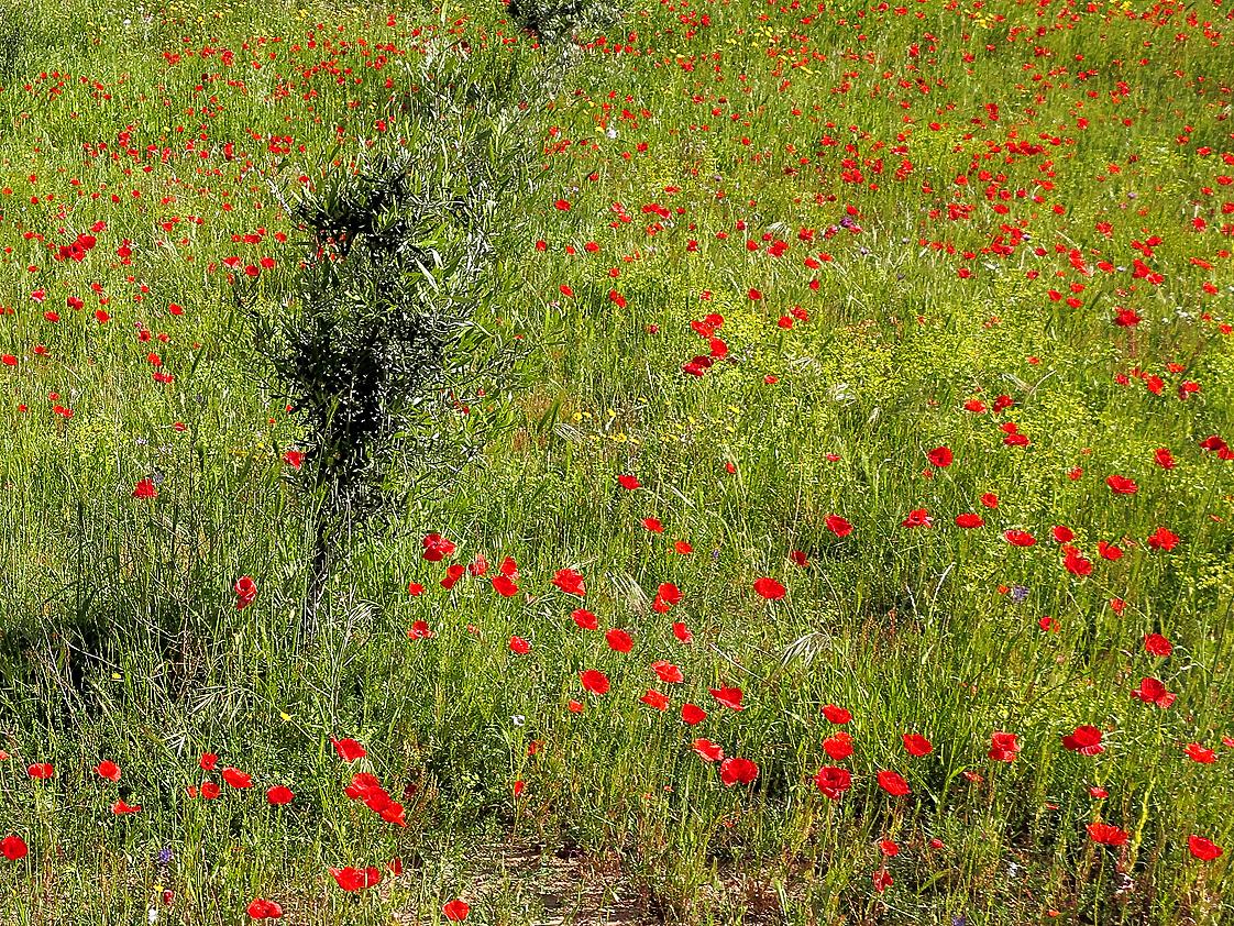 Frühling in Sardinien / Primavera in Sardegna (3)