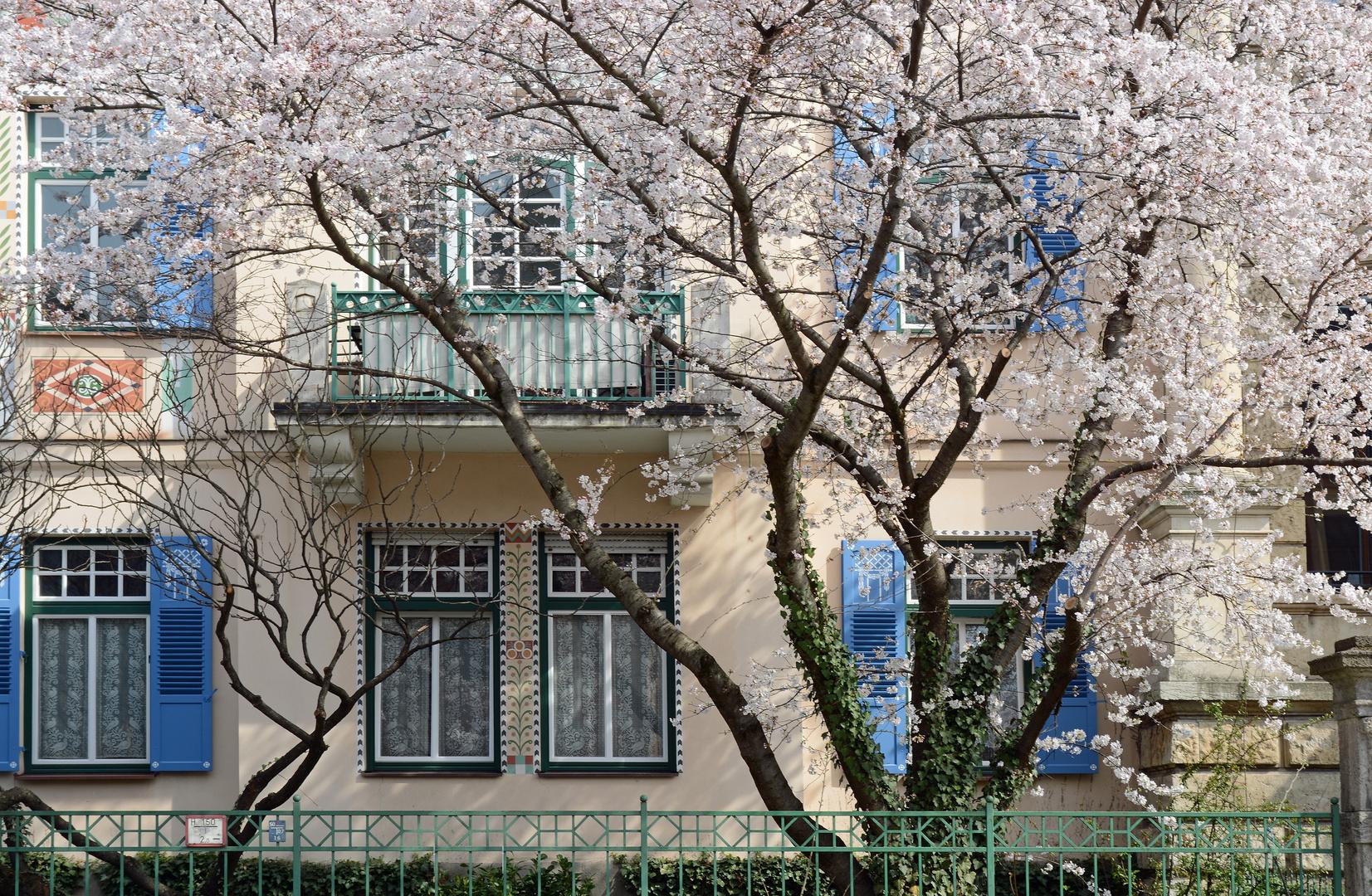 Frühling in Schwabing