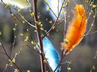 Frühling in Schweden............................