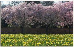 Frühling in Schwetzingen