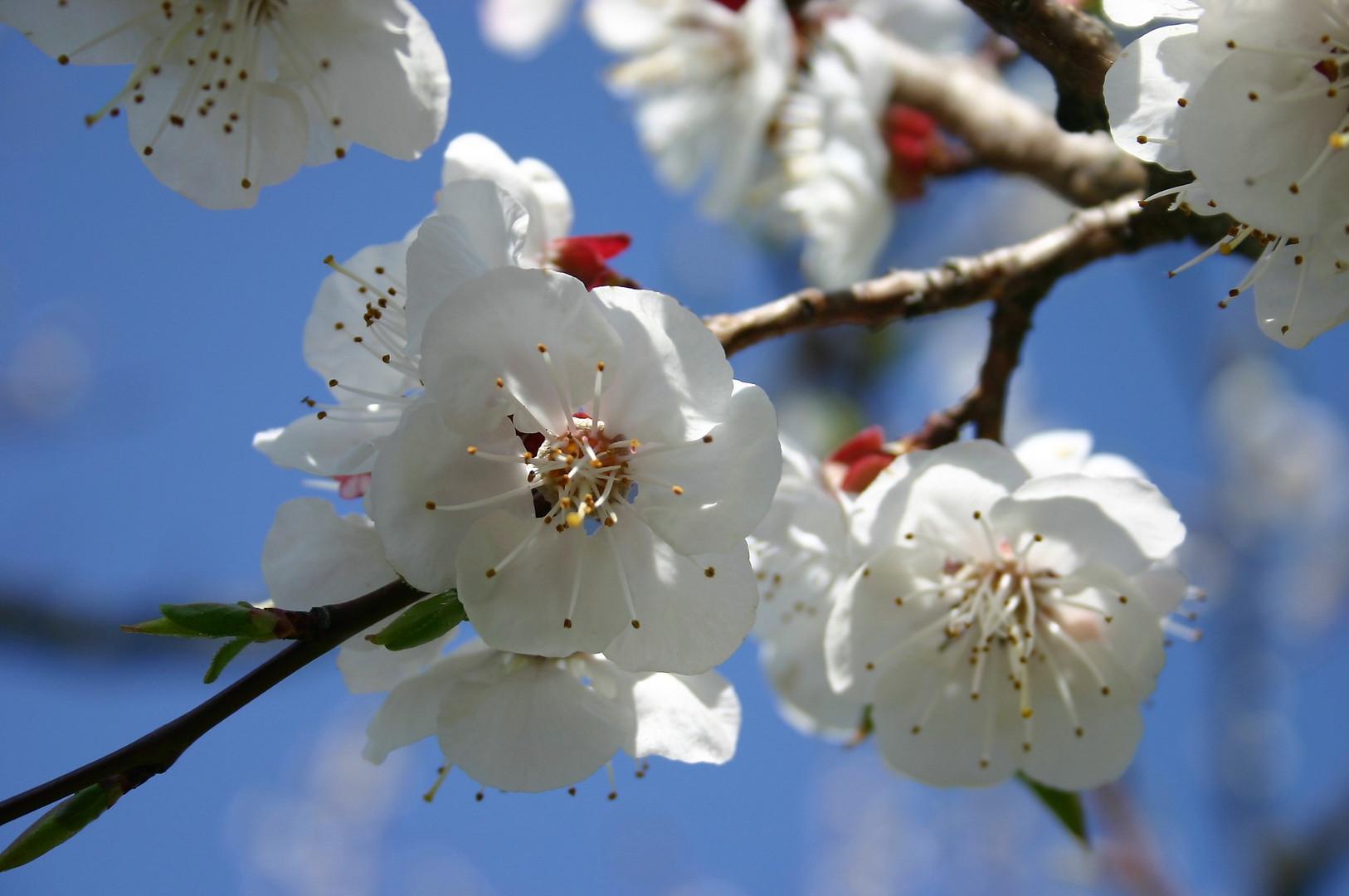 Frühling in seiner schönsten Form