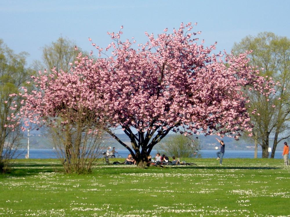 Frühling in seiner schönsten Pracht