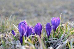 Frühling in Sicht