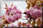 Frühling in Speldorf 01