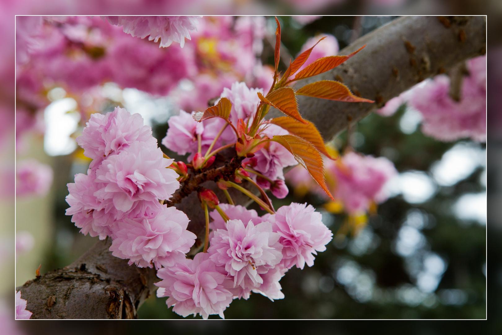 Frühling in Speldorf 02