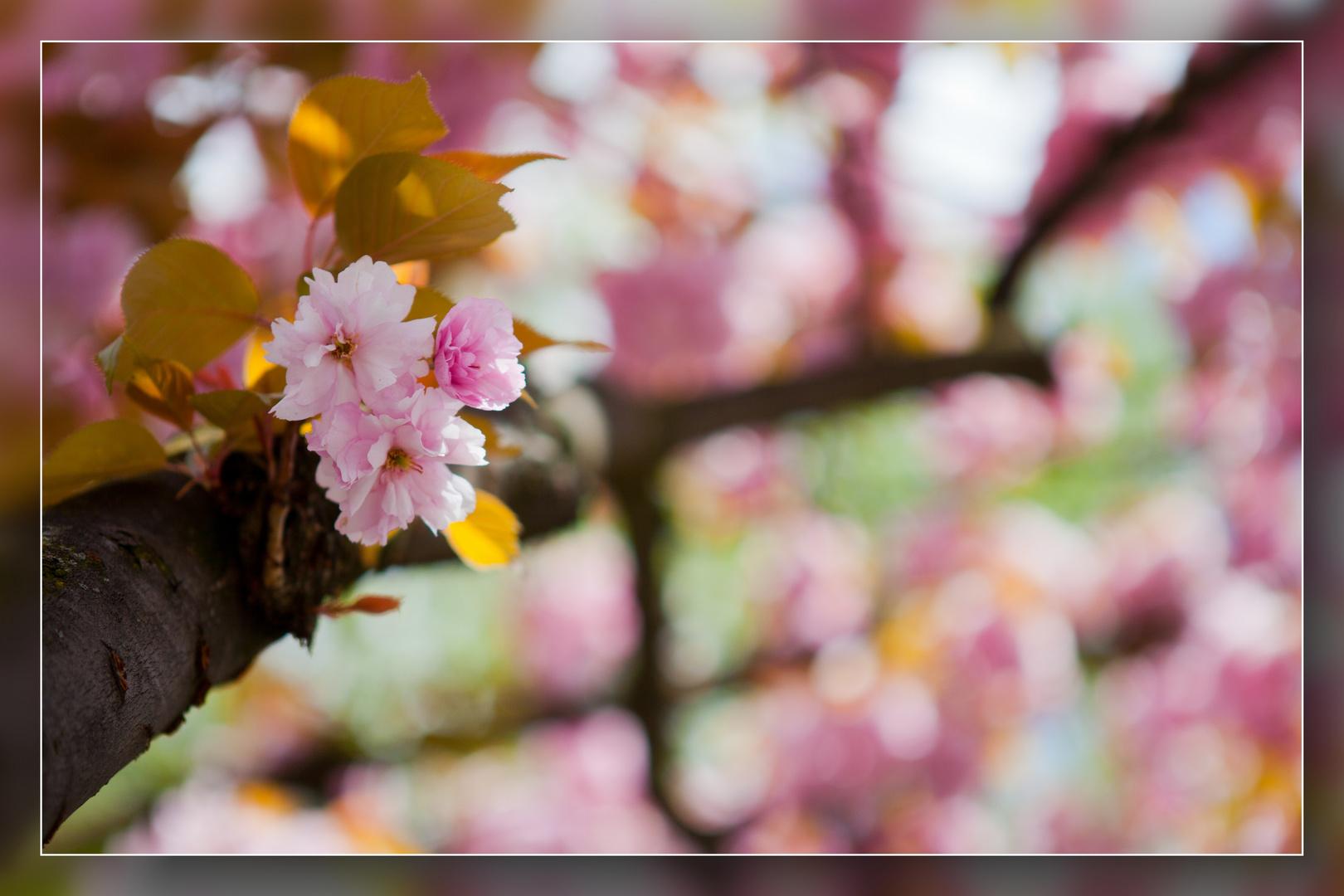 Frühling in Speldorf 04