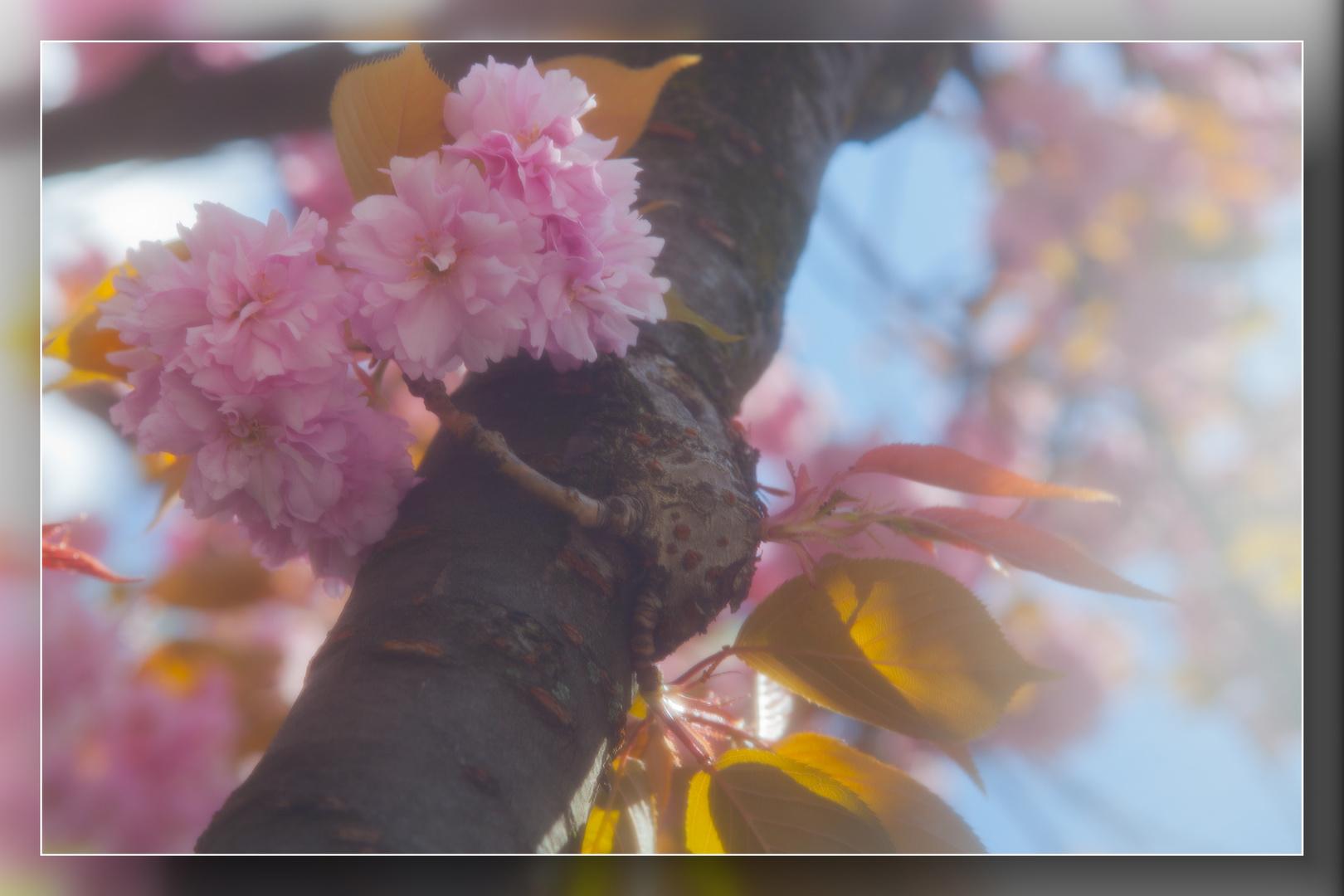 Frühling in Speldorf 05