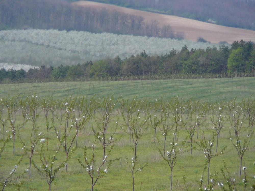 Frühling in Ungarn ...