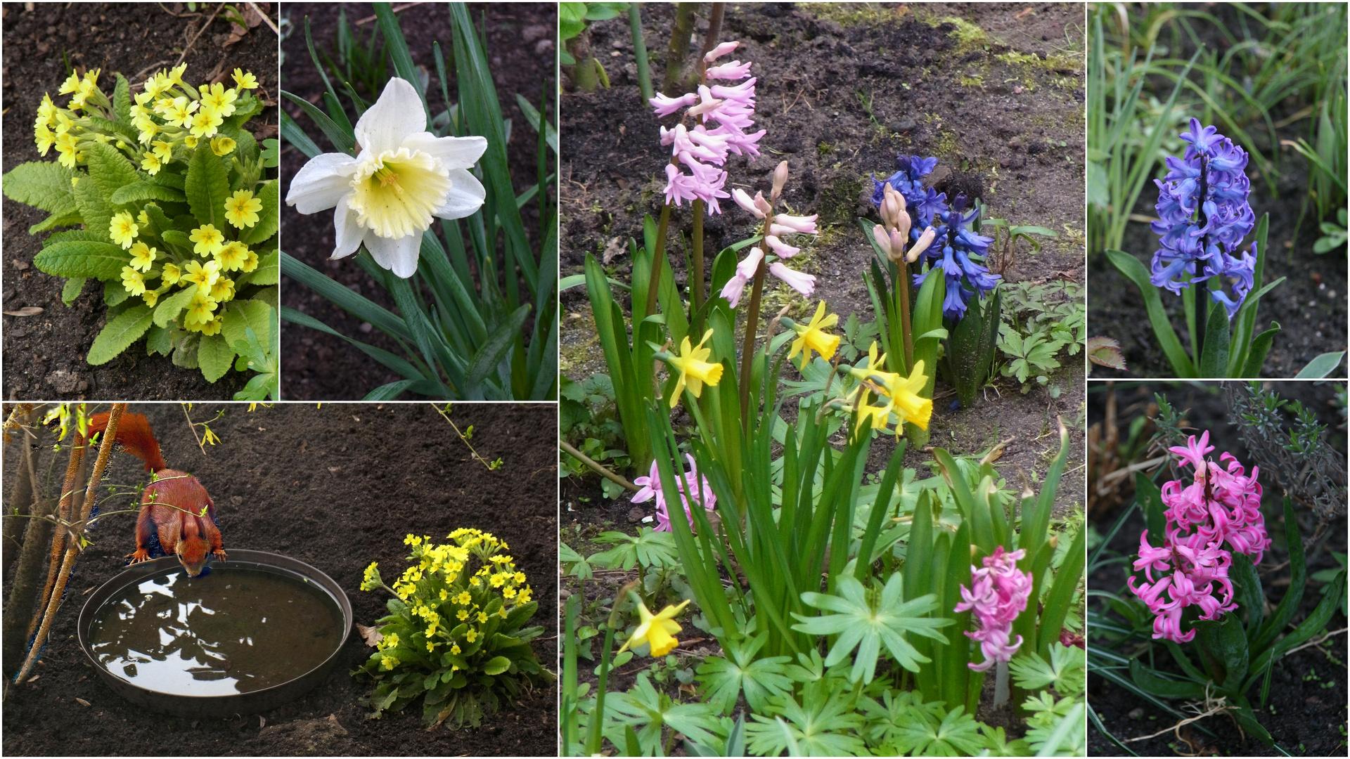 Frühling in unserem Garten 02