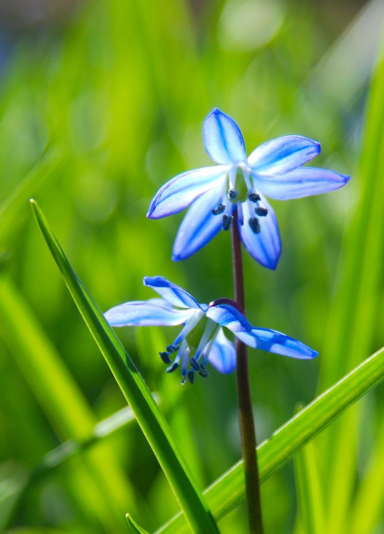 Frühling in voller Blüte