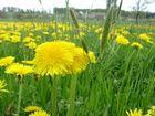 Frühling in Vollgang