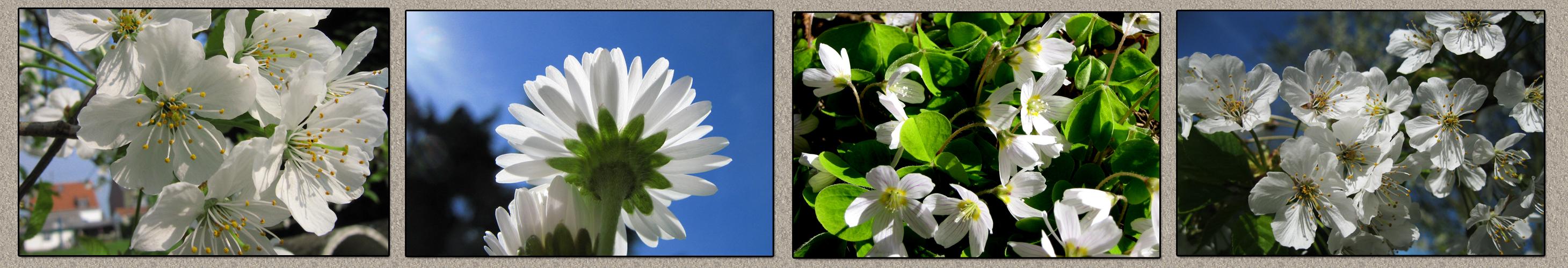 Frühling in weiß