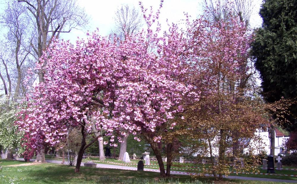 Frühling in Wetzlar