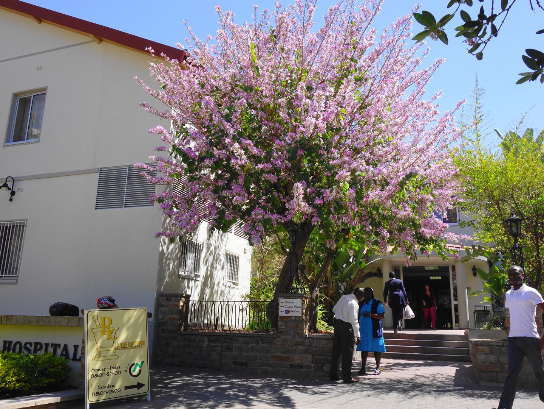Fruehling in Windhoek