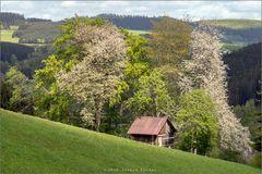 Frühling in Wittgenstein