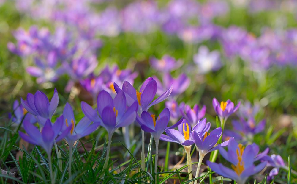 Frühling ist da ...