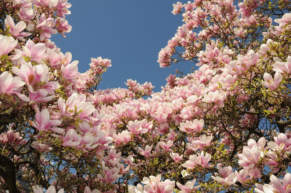Frühling ist da
