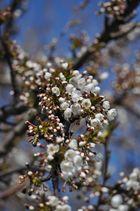 Frühling ist da....