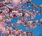 ...Frühling ist