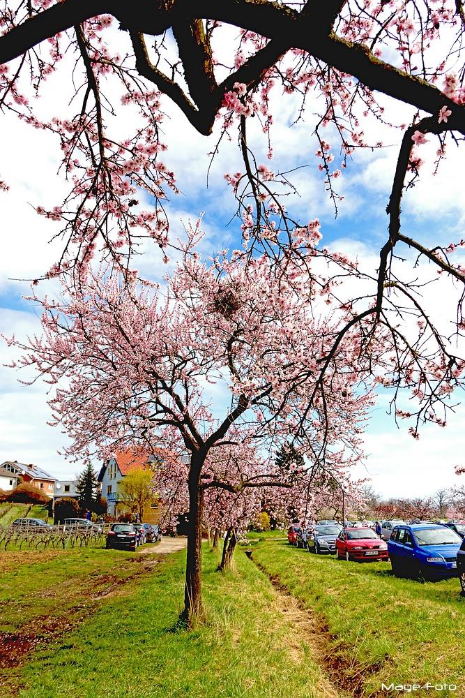 Frühling ist endlich da!