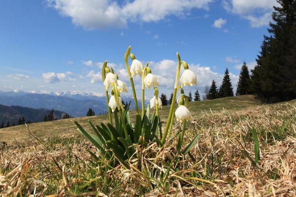 """"""" Frühling ist es """""""