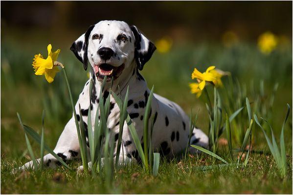 Frühling ist ja so schön