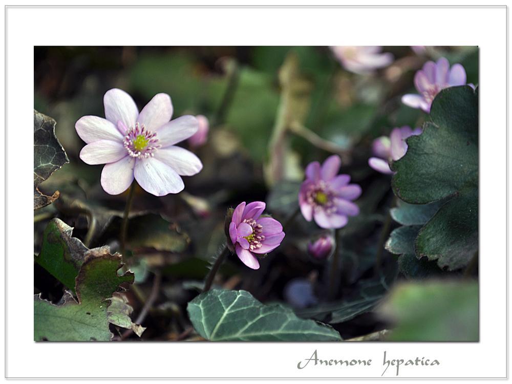 Frühling ist's ! (2)