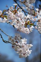 Frühling IV