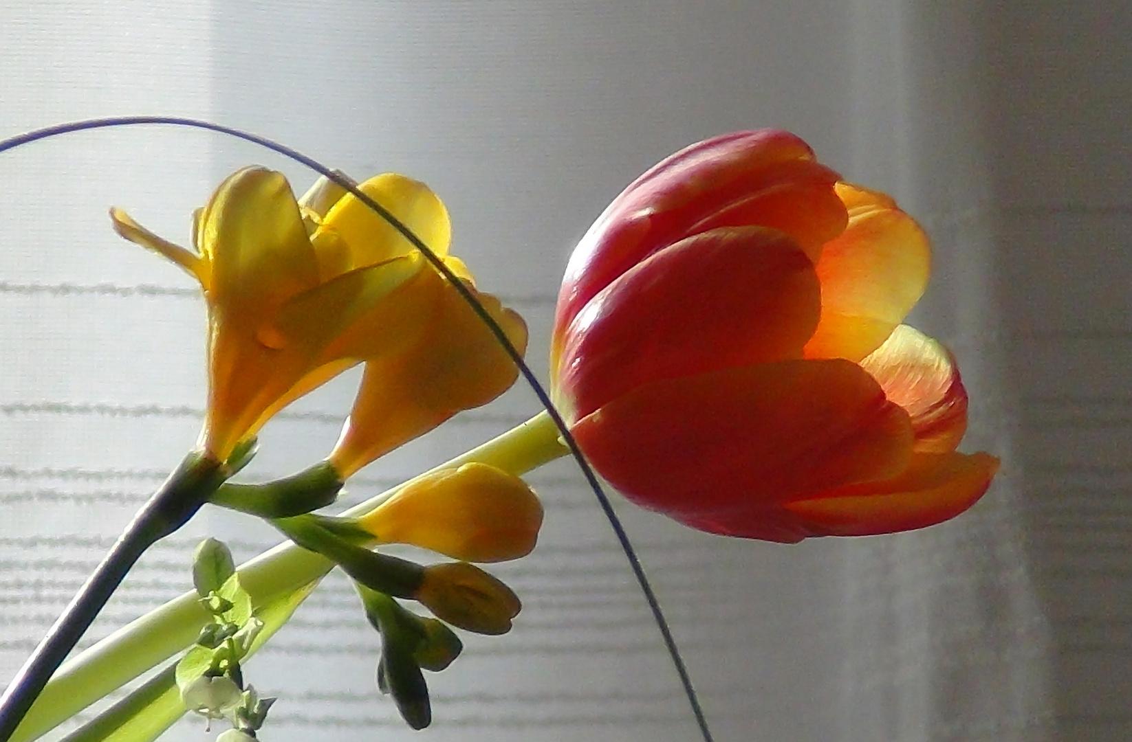 Frühling - jetzt !!