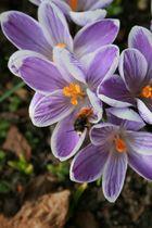Frühling kommt :)