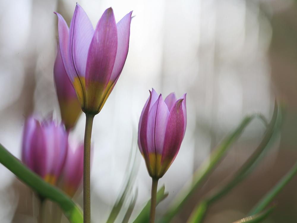 Frühling kommt...